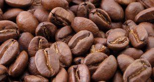 پخش آنلاین دانه قهوه مرغوب کاستاریکا
