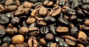 عرضه دانه قهوه جاوه