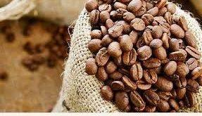 فروش بهترین دانه قهوه روبوستا ویتنام