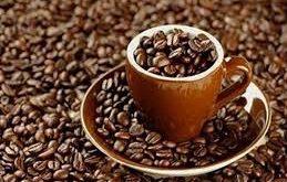 فروش آنلاین دانه قهوه کوپی لواک (Kupi Luwak)