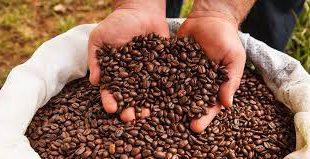 فروش دانه قهوه کاستاریکا